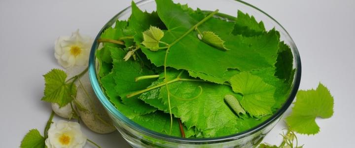 Сухая консервация виноградных листьев