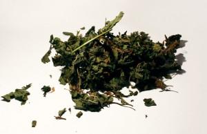 Сушенные листья лофанта