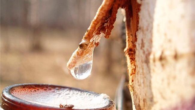 Полезные свойства сока из березы