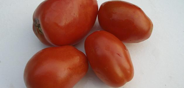 Устойчивые сорта томатов для теплиц