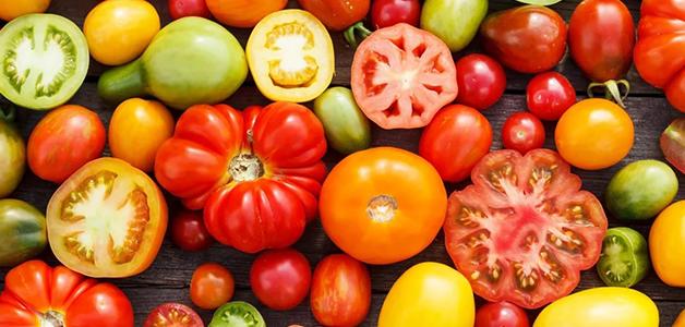 Лучшие сорта томатов для теплиц - описание и характеристики