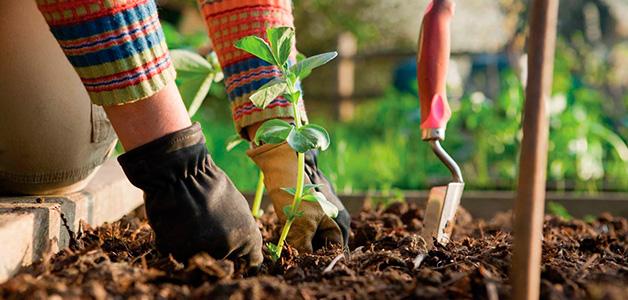 Лунный календарь садовода-огородника на июль 2016 года