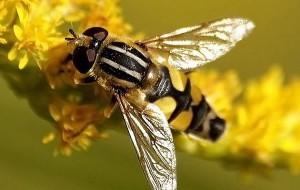 Препараты и луковая муха