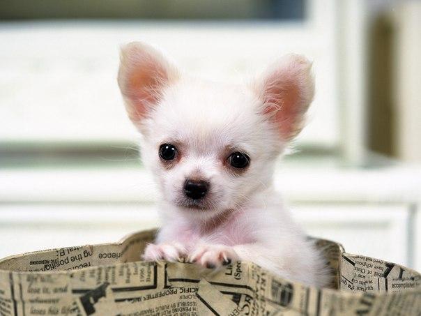 собака пакет сумка  № 1143297 загрузить