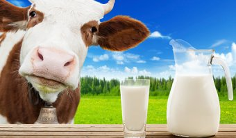 Молоко – польза, вред и совместимость с продуктами