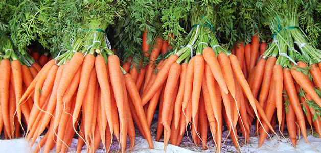 Посадка моркови в открытый грунт