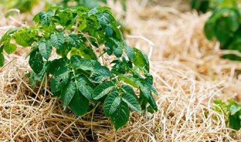Мульчирование – как быстро улучшить почву