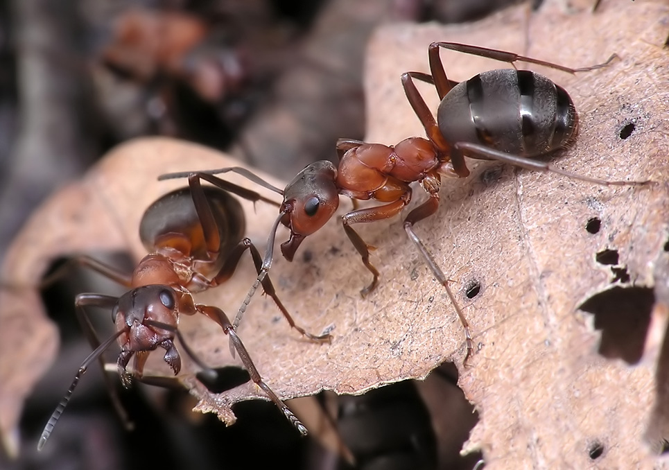 Чем потравить муравьев в доме
