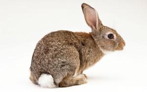 Мясо кролика польза и вред