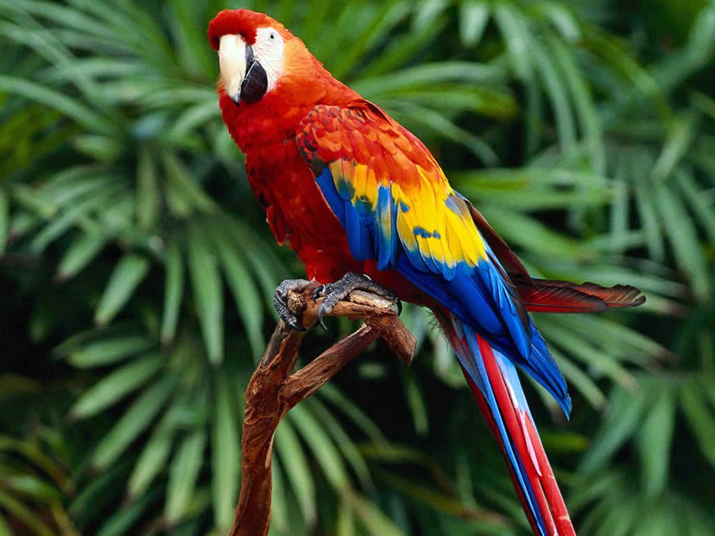 Почему попугаи выщипывают перья