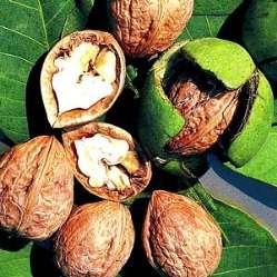 Народные рецепты зеленый грецкий орех