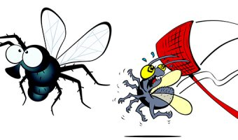 Мухи в доме: народные средства от насекомых