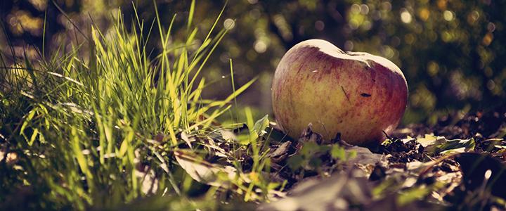 Если опадают яблоки