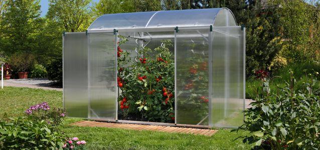 не растут помидоры