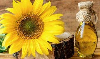 Подсолнечник – посадка и выращивание в открытом грунте