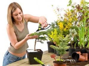 полезные домашние растения