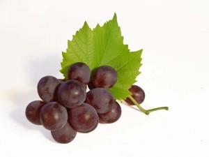 Фотографии винограда