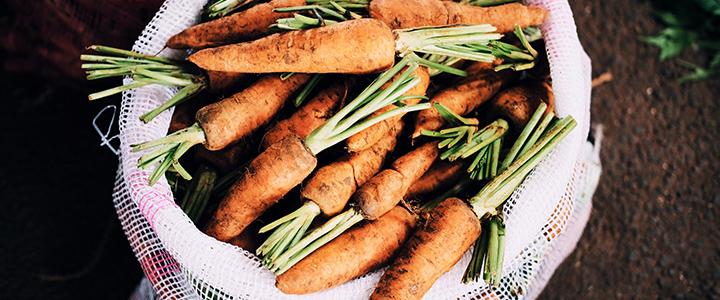 Польза моркови для организма