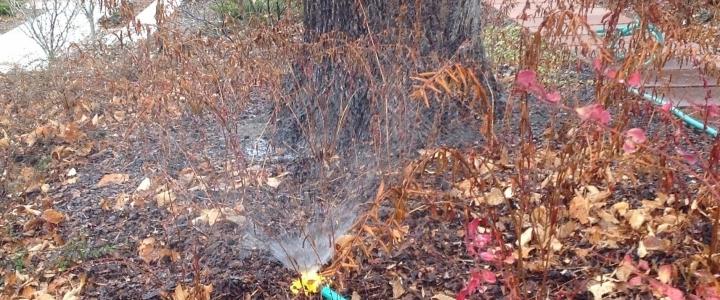 Сроки полива деревьев осенью