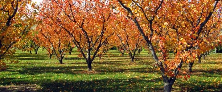 Поливаем деревья под зиму влагозарядный осенний полив