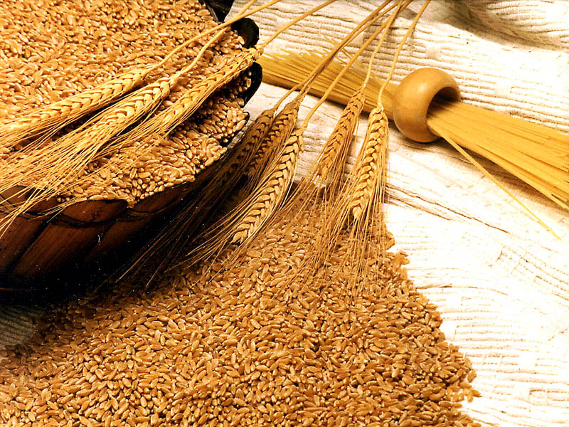 Govt. increases import duty on wheat to 30 pc