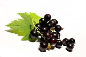 Вред черной смородины