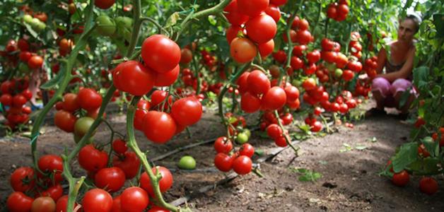 Методы выращивание