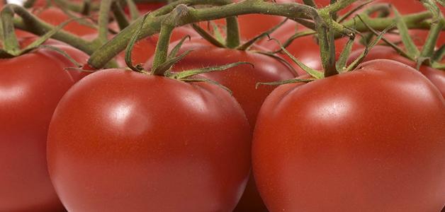 Полудетерминантные томаты - выращивание, уход и