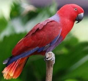 Каких попугаев можно научить говорить