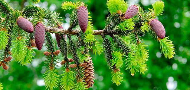 Нормативы затрат на выращивание деревьев кустарников 92