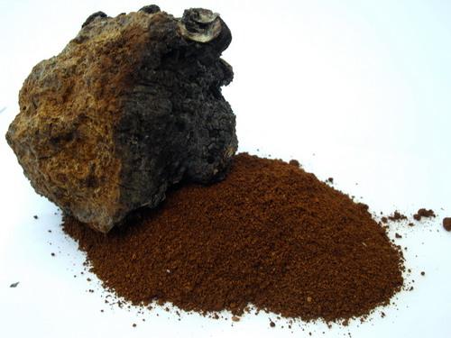 Гриб Чага при псориазе - рецепты свойства