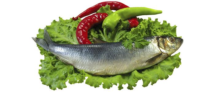 Рыба для зрения