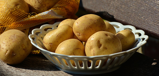 Картофель ГМО