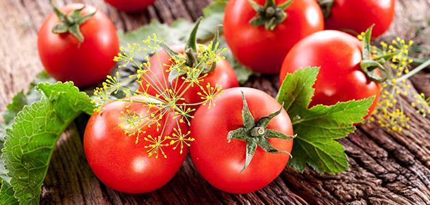 Помидоры ГМО