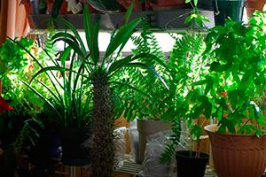 Польза комнатных растений