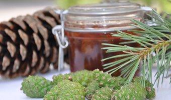 Рецепт варенья из сосновых шишек – готовим необычное варенье