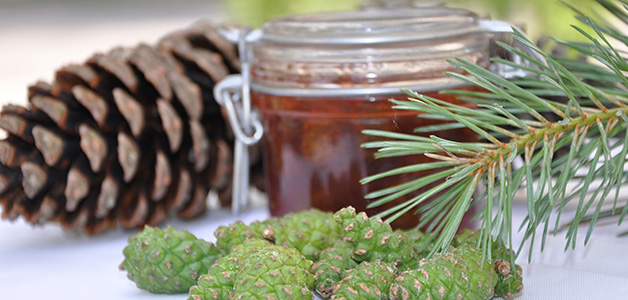 Рецепт варенья из сосновых шишек - готовим необычное варенье