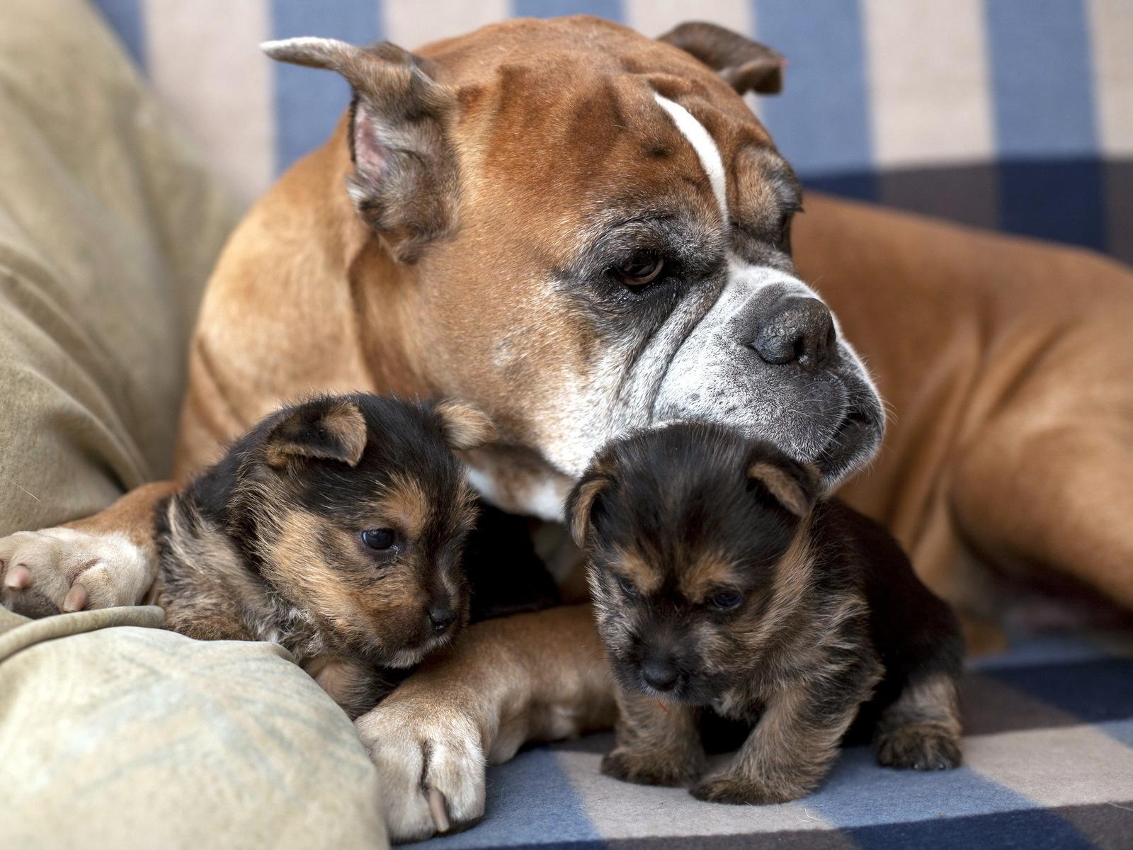 Как принять роды у собаки мелкой породы