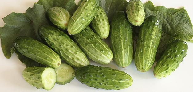 Лучшие семена огурцов для открытого грунта