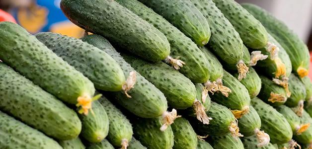 Сорта огурцов для теплиц - лучшие урожайные культивары