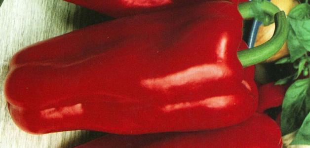 Лучшие сорта перцев для открытого грунта