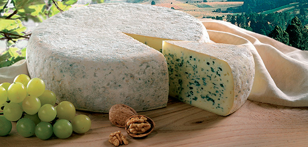 Сыр с плесенью - польза и вред изысканного продукта