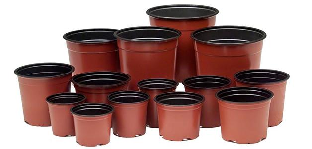 Емкость для рассады - горшочки, стаканчики, таблетки или контейнеры?