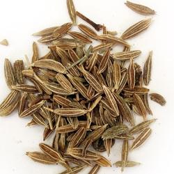 Тмин – польза и полезные свойства тмина