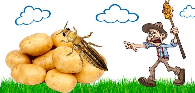 Трипсы - методы борьбы с вредителями