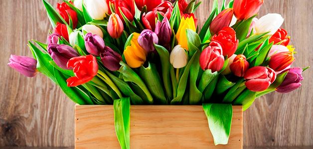 Тюльпаны - посадка и уход за тюльпанами в открытом грунте