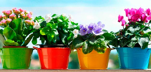 Удобрения для комнатных растений – домашние рецепты