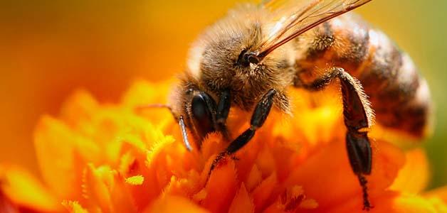 Cимптомы укуса пчелы