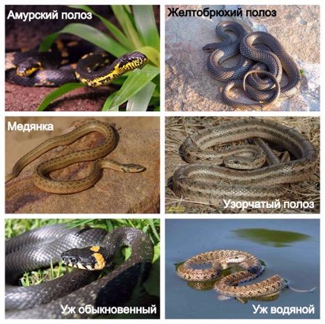 Помощь при укусе змей