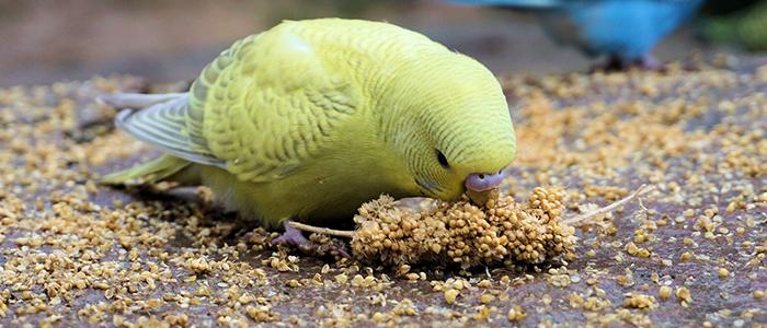 Корм для волнистого попугая